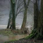 Flußaue an der Agger